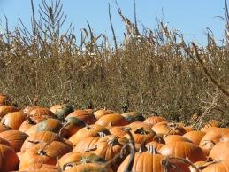 pumpkin cluster