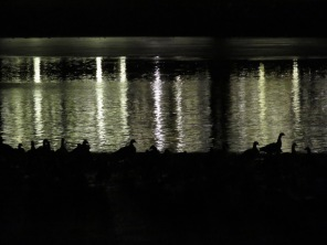 geese in profile,lake