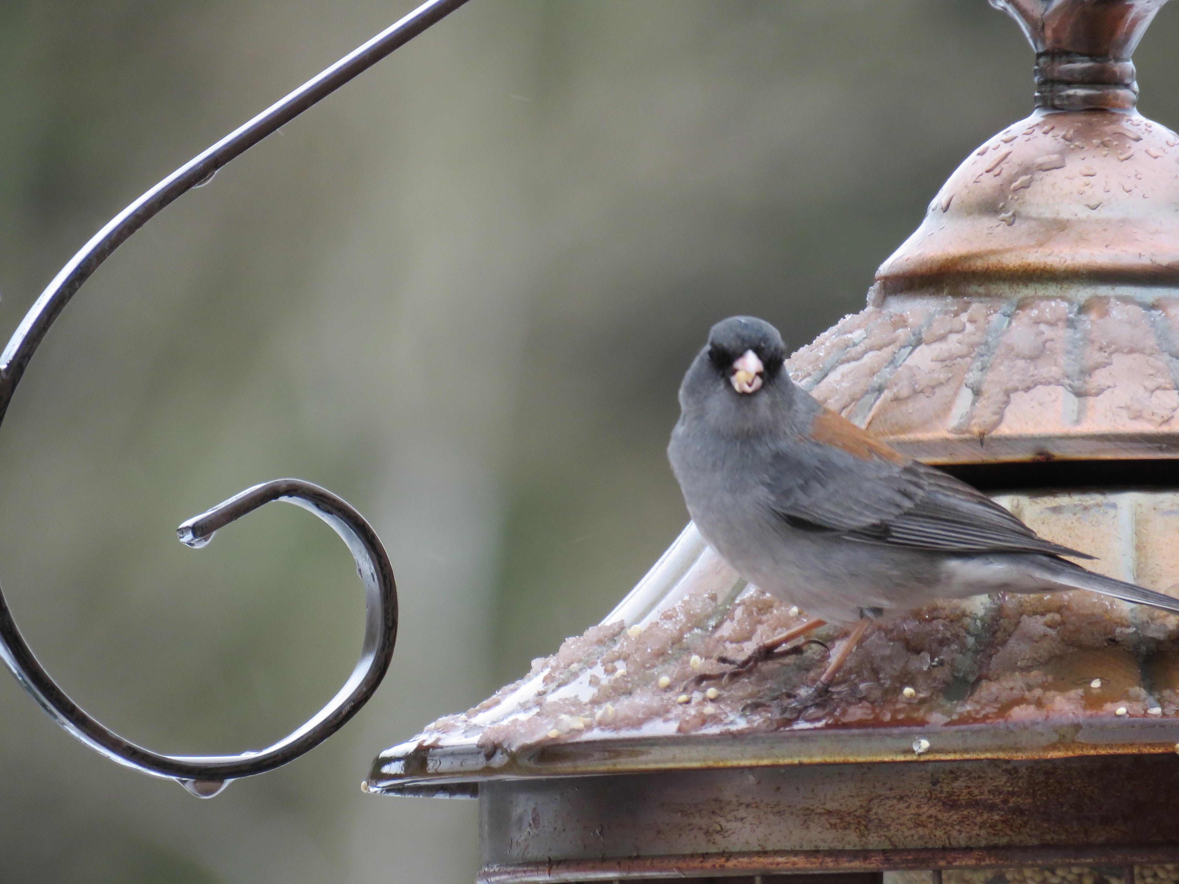bird on feeder roof macro