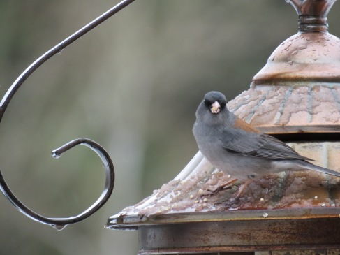 bird on feeder roof macro