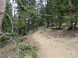 Path up mtn, RMNP