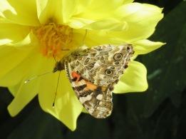 butterfly upside down, distance