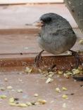 stradled bird